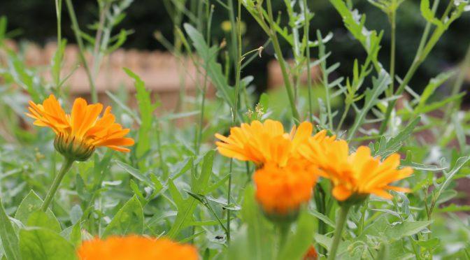 Beete zu vergeben im gemischten Garten!